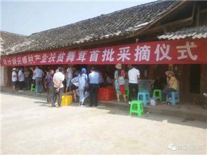 """筠连镇舟尖峰村的村民们好开心,因为尝到了""""甜头""""!"""