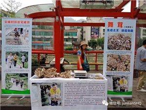 今天同时出现在筠连几个农贸市场的大蘑菇到底是什么来头呢!