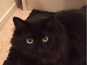 这猫的隐身术什么水平?