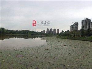 一夜暴雨!看看湿地公园成什么样了。。。