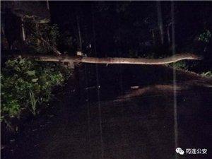 什么情况?筠连警察大晚上还在公路上冒着暴雨锯树子!