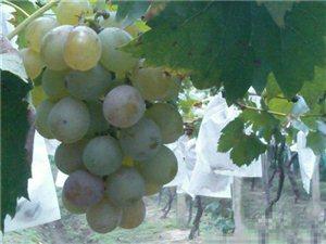 惊呆了,吃葡萄竟然有这么多好处!