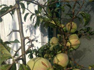 这是什么果子,能吃吗?