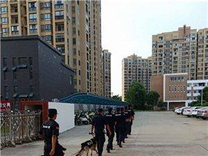 望江特警携警犬街面巡逻