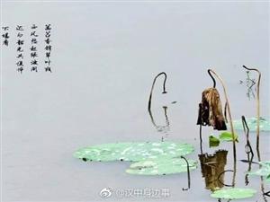 南郑湿地公园的芦苇美景,私藏了一波惊艳秋色