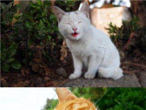 市井里的流浪猫