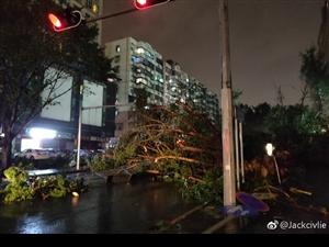 """""""山竹""""肆虐后的大街,清理也是不易吧~~~"""
