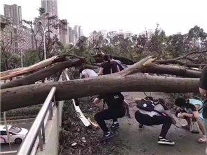 丛林大冒险——台风过后的上班路