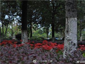 汉中天汉湿地公园彼岸花开