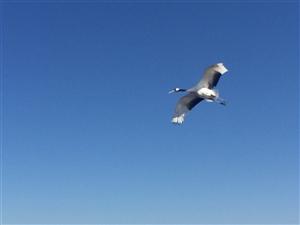 国庆假期第三天,不用远走,看我扎龙鹤舞景观
