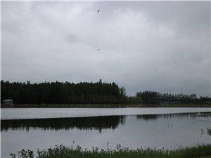 新蔡美景――西湖