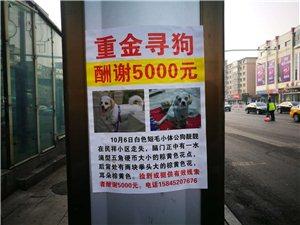 家中小狗在民祥小区附近走失