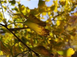 深秋时节,醉在汉中留坝的秋光里