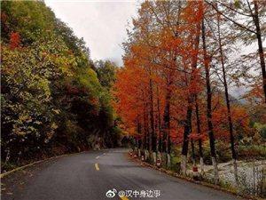 赏千年银杏,逛留坝紫柏山,走最美乡村公路