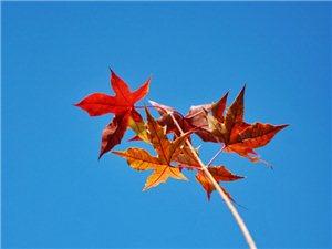 深秋,树叶几乎落尽