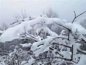 雪落南郑龙头山