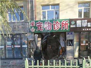 中华东路一家宠物店被车撞了