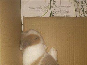 求助有经验的粑粑麻麻,小兔子刚到家,已经这样睡了快一个小时