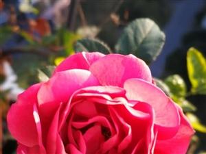 家有花花,心情美丽,谢谢大家点赞鼓励~