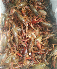 小龙虾么么哒,我爱小龙虾,么么么么哒,麻辣小龙虾,么么么么哒!