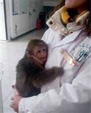 被人遗弃?宜宾流杯池公园惊现一只受伤的小猴子,在寒风中瑟瑟发抖