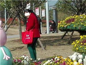 植物园偷摘菊花的老两口