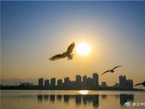 威尼斯人网上娱乐平台江边的红嘴鸥