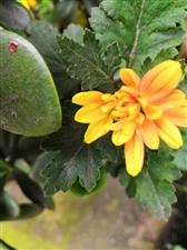 冬天,并非只有落叶和枯枝!细细品味,它也有春的味道!