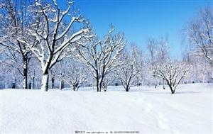 新郑的第一场雪来了