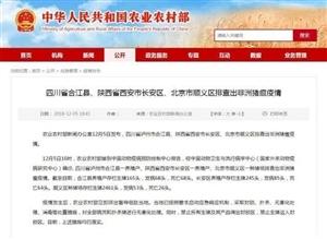 泸州合江县排查出非洲猪瘟疫情,已启动应急响应机制