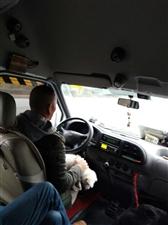 今日奇葩,荆门至沙洋的客车司机在开车时怀里抱着一只