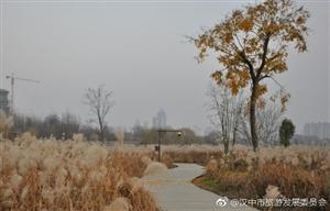 威尼斯人网上娱乐平台天汉湿地公园芦苇