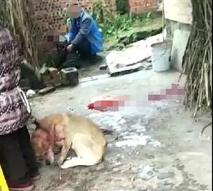 泸县福集镇一犬只咬伤两人,伤者暂无生命危险,犬只已被打死