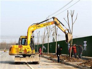 春节过后忙绿化