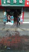 老城菜市场一花鸟店,每天一早把鸟类冲洗在路边