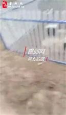 霍邱潘集镇治污的史河潘申路桥下实况请县分管领导给予回复。