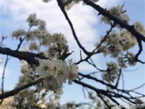 汉中杏花儿开,白了山头,美了年华