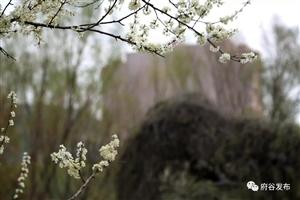 养眼!河滨公园春季美景来袭