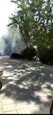 长安西路一花池着火了!花池里花草都给烧了