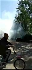 花池着火!顺带着种在花池里的松树也给烧了