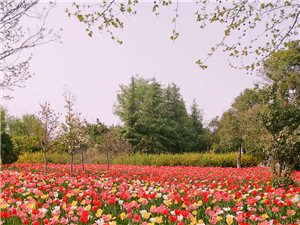 新蔡在�有����D:�癯瞿闶�C里最美的春天!