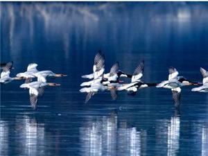 省群艺馆为荆门摄影家在武汉办野生鸟类摄影展