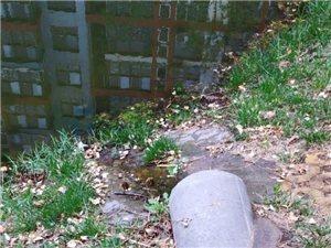 """滨州:麒麟阁小区北的沟,通往新立河的""""绿毛湖""""该如何整?#21361;?</a"""