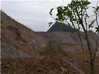 重庆市黔江区法院验收环资资源案件 土地治理修复效果
