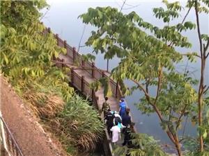痛心,西津大桥一男子跳河溺亡