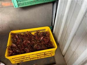 大化前面的这个小龙虾垂钓养殖基地还多好耍