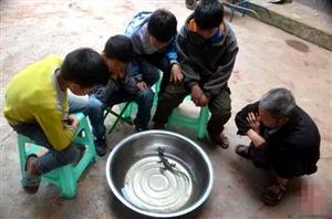 """泸州古蔺农民菜园旁惊现""""鳄鱼宝宝?#20445;?#31995;境内首次发现"""