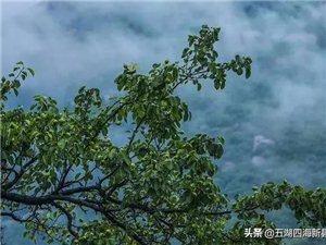【美景】在这个浓情的五月,来一场与新县西大山的约会吧