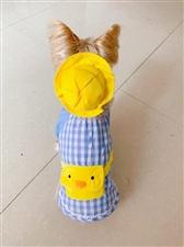 给我家狗狗买的新衣裳,你们说好看不?哈哈