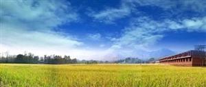 宿州市72个省级美丽乡村中心村建设全面启动